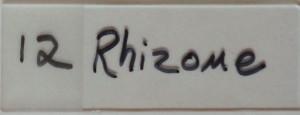 Featherly_0002_12 Rhizome