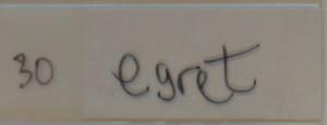 Veach_0000_30 Egret