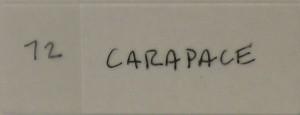 dinger__0012_72 carapace