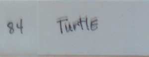 featherly__0000_84 turtle
